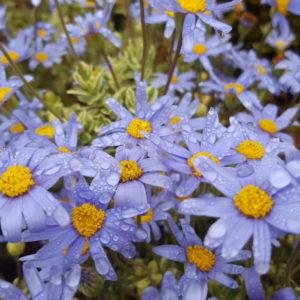 ラ・ペジーブル 木更津のエステ・ローフード講座-お花もお肌も同じだな